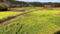 Koshiba Railway Nanohana field and train 39072039