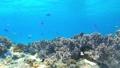 菲律宾Pangorao的水下射击固定 39078536
