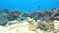 菲律宾Pangorao的水下射击固定 39082432
