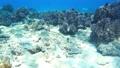菲律宾Pangorao的水下射击固定 39225889