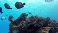 菲律宾Pangorao的水下射击固定 39225895