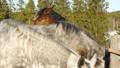 horse, farm, animal 39238364