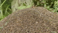 Big anthill with colony of ants in summer forest 39256488
