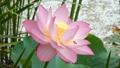 風景 景色 植物の動画 39292909
