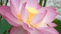風景 景色 植物の動画 39292910