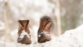 red squirrel standing in and on shoes in snow 39301071