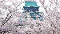ปราสาทซากุระและโอซาก้าบานสะพรั่ง 39347907