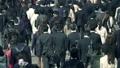 サラリーマン 歩く ビジネスマンの動画 39352360