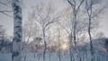 霧氷 樹氷 冬の動画 39394808