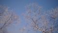 霧氷 樹氷 冬の動画 39394812