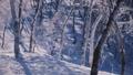 霧氷 樹氷 冬の動画 39394822