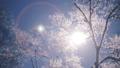 霧氷 樹氷 冬の動画 39394824