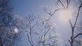 霧氷 樹氷 冬の動画 39394825