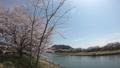 一目千本桜 大河原 39487597