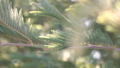 Close up of green tree leaves in blur background 39494098