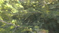 Forest tree leaves moving in the wind outdoor 39494214
