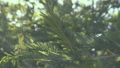 Forest tree leaves moving in the wind outdoor 39494215