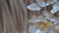 Sea shell wind chime on summer vacation beach 39494217