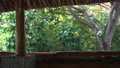 Green lush jungle landscape from cabin window 39494267