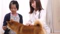 動物病院(小学生と柴犬) 39514030
