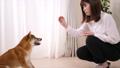 ペット(柴犬と若い女性) 39514118
