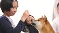 ペット(柴犬と子供) 39514140