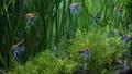鱼 动物 水族馆 39516670