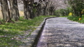 桜 桜吹雪 サクラの動画 39539355