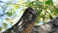 새, 조류, 관찰 39564891