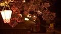 夜樱花照亮了城崎温泉 39591634