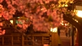 夜樱花照亮了城崎温泉 39591635