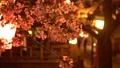 夜樱花照亮了城崎温泉 39591636