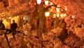 夜樱花照亮了城崎温泉 39591637