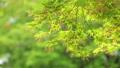 葉 植物 新緑の動画 39624541