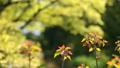 芽吹きと新緑 フィクス撮影 39624687