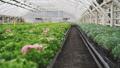 horticulture blossom gardening 39655631