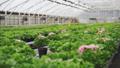 bloom, gardening, greenhouse 39655643