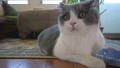 毛孩 貓 貓咪 39707079