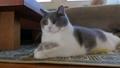 毛孩 貓 貓咪 39707226