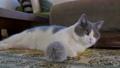 毛孩 貓 貓咪 39707228