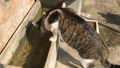Cat drinking some water from water container 39755341