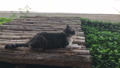 Cat chilled out at home garden with butterfly 39755342