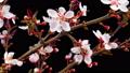 花 开花 花朵 39795161