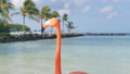 Flamingos on the beach. Aruba island 39807280