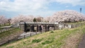 加治川の水門と桜 39899841