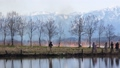 福島潟の葦焼き 39923499