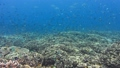 Intact coral reef with hard corals and different tropical fish. Amazing diversity of fish species 39926686
