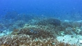 Breathtaking unspoiled coral varieties and many fish species 39926813