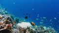 Underwater landscape of coral reef. Amazing underwater marine life world. Scuba diving and 39953098