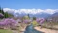 春の大出公園 40002120
